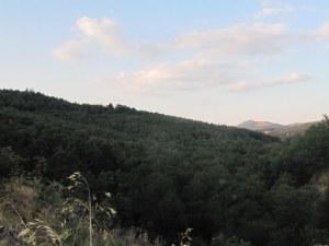bosque - El Balcón del Pueblo